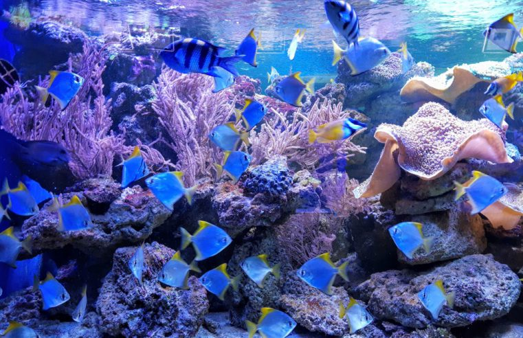 Обзор океанариума «Морская сказка» в Киеве