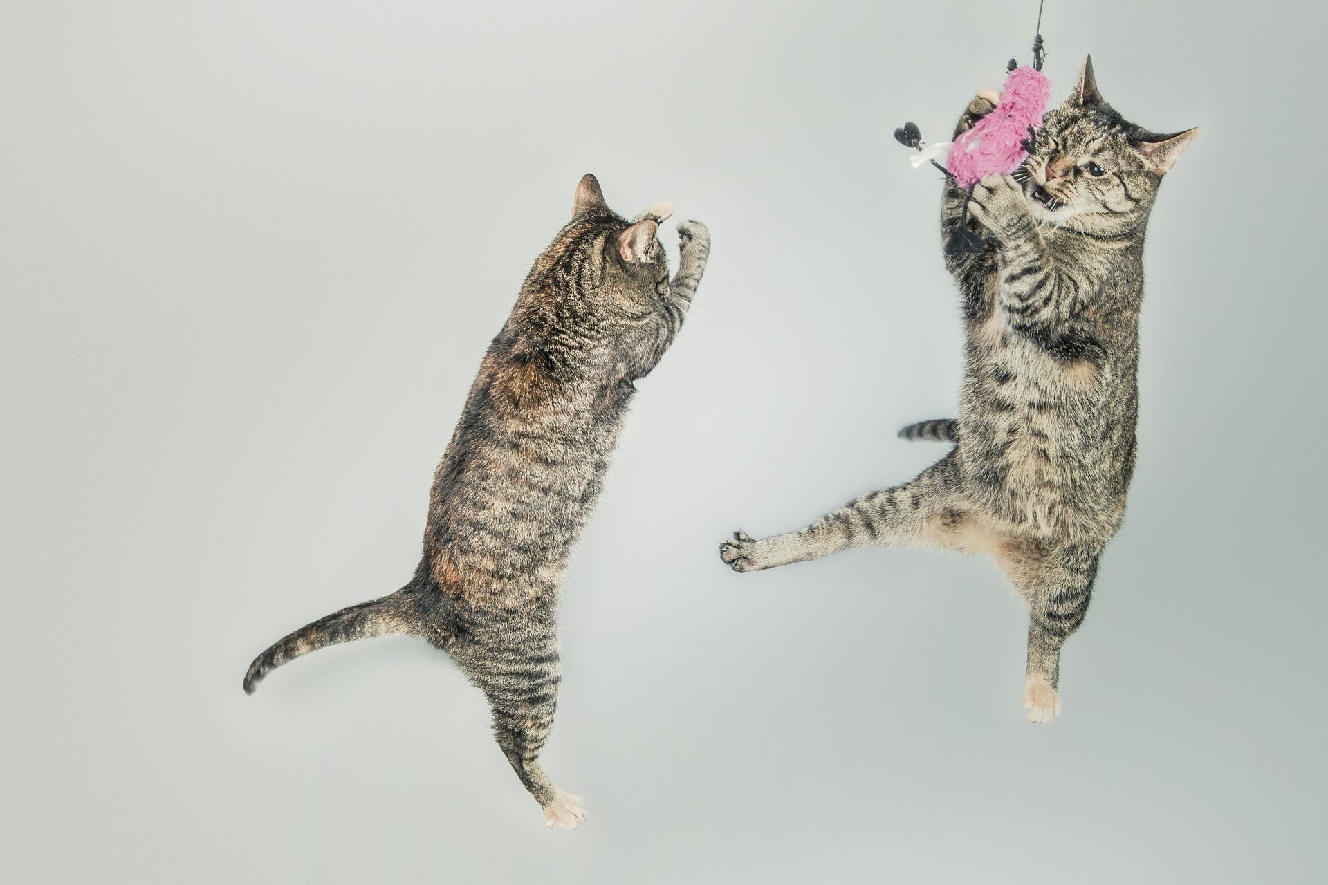 Краткий обзор книги «Если все кошки в мире исчезнут» (автор: Гэнки Кавамура)