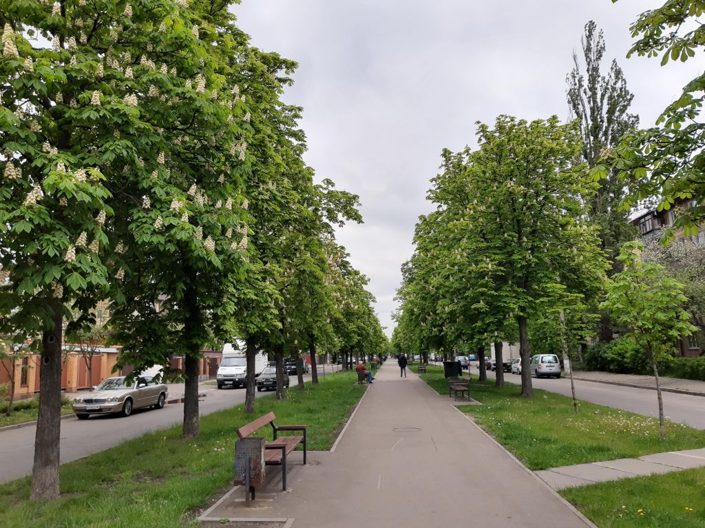 Обзор улицы Саратовской в Киеве и длинной аллеи каштанов (+месторасположение + 20 фото)